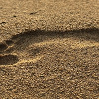 Arched feet essential for walking 'evolved in humans 3.5 million years ago'