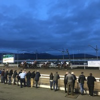 The Bluffer makes his maiden appearance at Dundalk race-course