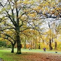 Pilot scheme for 24-hour opening of three Belfast parks this summer
