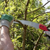 The Casual Gardener: There's no call to be a pruning prude this spring