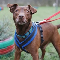Britain's loneliest dog looking for new home after 439 days in RSPCA care