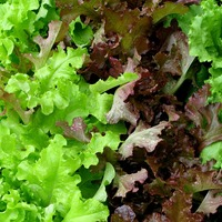 Lettuce grown in space safe and nutritious, say astronauts