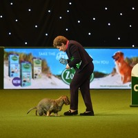 Crufts winner Maisie takes toilet break live on TV during lap of honour