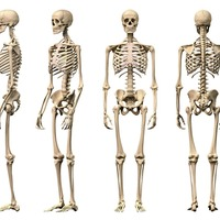Why a healthy skeleton is a key defence against illness