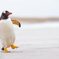 Penguin goes on 'field trip' at aquarium as it closes in response to coronavirus
