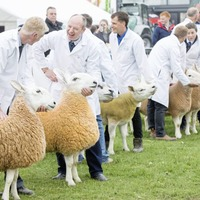 Balmoral Show cancelled due to coronavirus pandemic