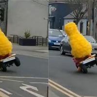 Big Bird spotted pulling wheelies in St Patrick's Day celebration