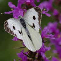 Gardening: Help butterflies thrive with a seasonal to-do list