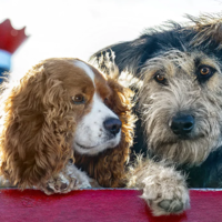 7 of the best films about dogs to watch on Disney+