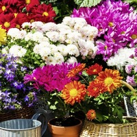 Gardening: How to grow flowers that are ideal for cutting