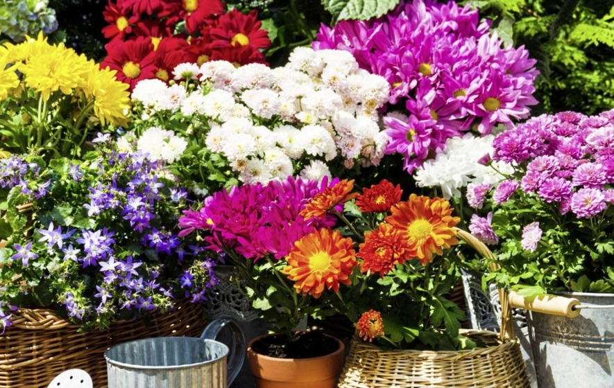 Gardening How To Grow Flowers That Are Ideal For Cutting The