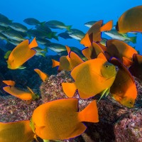 Substantial recovery of oceans possible by mid century – scientists