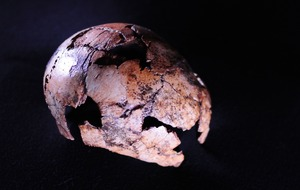 Human ancestor Homo erectus 'at least 150,000 years older than thought'