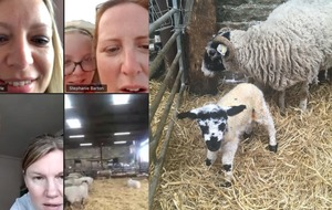 Lamb named Zoom after being born during group video chat