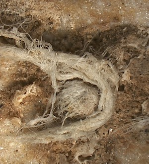 Scientists discover ancient yarn made by Neanderthals at least 40,000 years ago