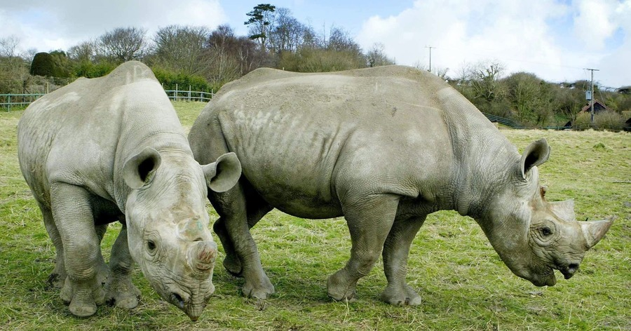 Red-billed oxpeckers protect black rhinos against poachers � study - The Irish News