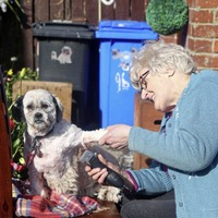 Coronavirus unleashes 83-year-old's new skill as dog groomer