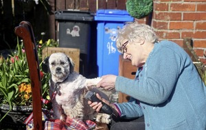 Coronavirus unleashes 83-year-old's new skill as dog groomer