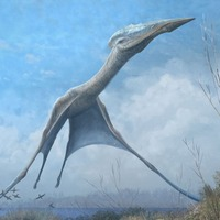 Pterosaurs could help engineers design more efficient drones, scientists say