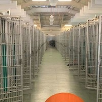Watch: Animal shelter empties its cages after record number of adoptions