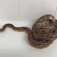 3ft corn snake discovered in family's bathroom
