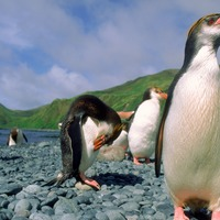 Penguins help map Antarctic regions in greatest need of protection