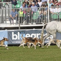 First postponed from May to August - now Balmoral Show is cancelled altogether