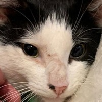 'Miracle cat' survives being hit by train