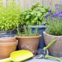 Gardening: Why you really don't need to be an 'expert' to start gardening