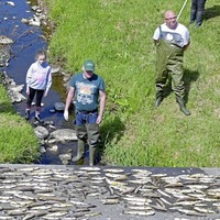 Investigation launched to identify source of pollution which left hundreds of fish dead in Co Antrim