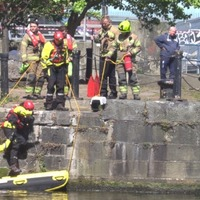 Cat stranded on driftwood rescued from tunnel by firefighters on raft