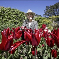 Glenarm Castle runs 'click and collect' tulip festival in aid of St John's Ambulance