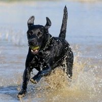 Puberty can be a ruff time for dogs too – study