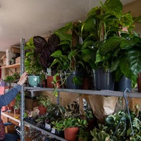 Shopkeeper's bungalow overwhelmed with thousands of plants as online trade booms