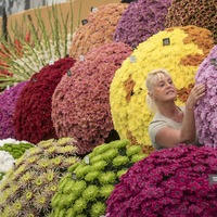 In Pictures: Blooming shame – what you're missing at the Chelsea Flower Show