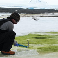 Global warming is turning parts of Antarctica green, scientists say