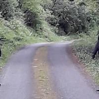 Continuity IRA 'patrol' roads in rural Fermanagh