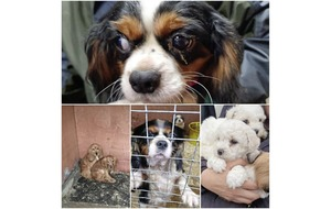 13 puppies 'bred in horrendous circumstances' rescued by animal welfare charity