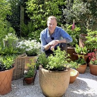 Gardening: 10 of the best plants for pots
