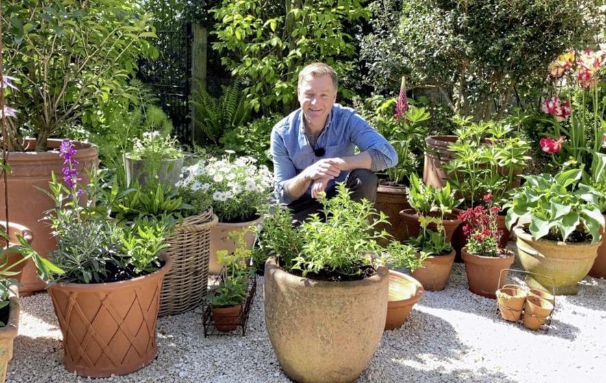 Best Plants For Pots, What Plants Are Best For Patio Pots