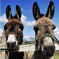 Nuala McCann: Co Down little-donkey therapy story was balm for the soul