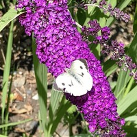 Gardening: How to create a bed for pollinators