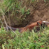 Horse freed from riverbank by firefighters and a farmer