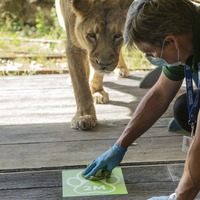 Government must let London and Whipsnade Zoos reopen, ZSL urges