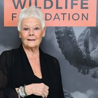 Dame Judi Dench: I'm not allowed any time off from TikTok rehearsals