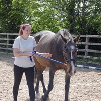 How horse therapy has been helping healthcare staff to think outside the box
