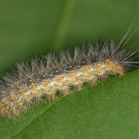 'Plants use odour camouflage tricks to avoid being eaten by insects'
