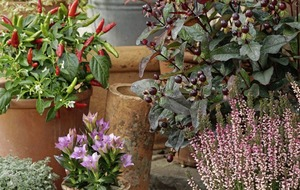 Gardening: How to combine veg and flowers in pots for an eye-catching display