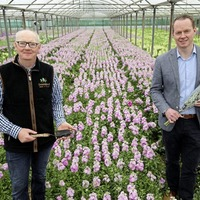 Greenisland Flowers in full bloom after securing new Lidl supply deal