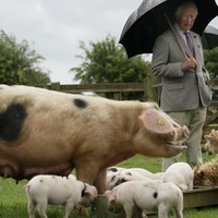 Charles in hog heaven on visit to TV star's farm attraction
